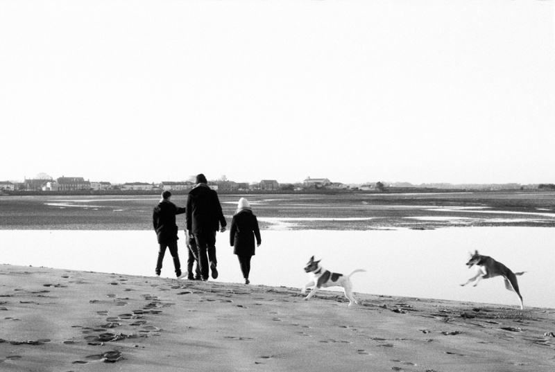 Aimee, John and Matt with their dogs Molly and Sauso stroll during the low tide on a Dublin beach near Howth. Dublin, January 2015.